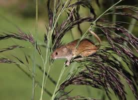 一组顽皮可爱的小老鼠图片