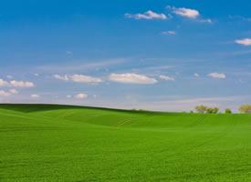 清新护眼绿色草原风景桌面壁纸