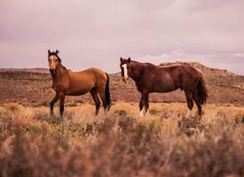看上去特别有精神的马匹图片