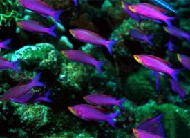 美妙多彩的鱼群图片