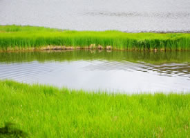云南普达措国家公园风景桌面壁纸