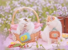 精选一组可爱软萌猫咪图片