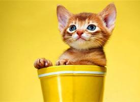 一组卡哇伊的小猫咪图片
