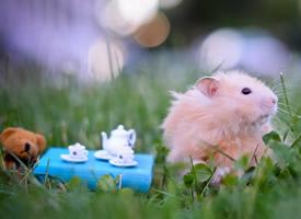 呆萌可爱的小鼠图片桌面壁纸