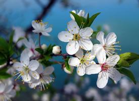 精选唯美樱花风景图片桌面壁纸