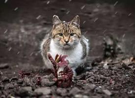 感受下最真实的小猫灵魂图片