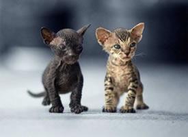 释放小猫真实天性的图片