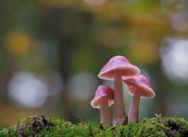 精选野生蘑菇图片桌面壁纸