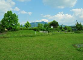 清新护眼绿色草地风景桌面壁纸