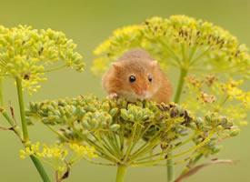 春天里活泼的小老鼠图片