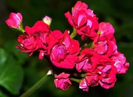 小清新花卉图片高清电脑壁纸