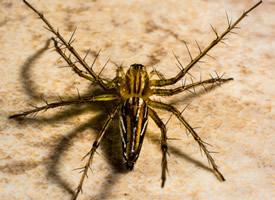 好可怕的蜘蛛微距离图片