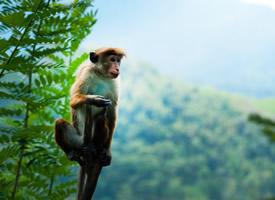 活泼可爱的猴子图片欣赏