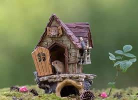 一组调皮可爱的小老鼠图片