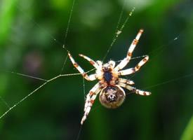 恐怖的蜘蛛近距离拍摄图片