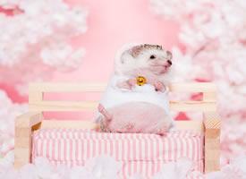 一组粉粉的超可爱的刺猬图片