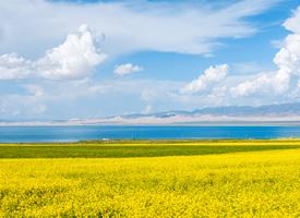 唯美油菜花春季风景桌面壁纸