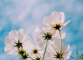小清新唯美春季花卉桌面壁纸