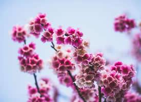 唯美盛开的花朵风景图片桌面壁纸