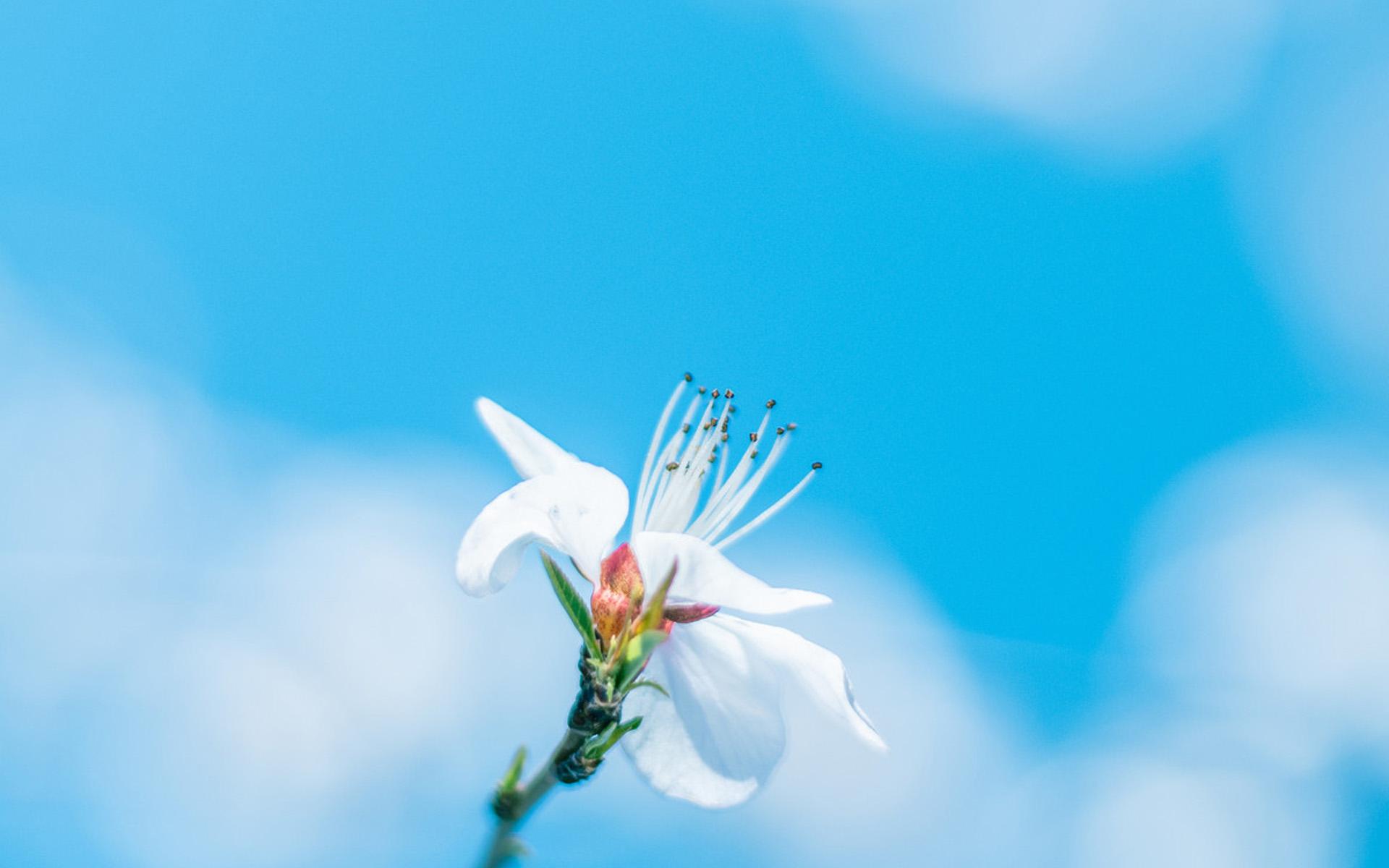 清新淡雅花卉图片桌面壁纸