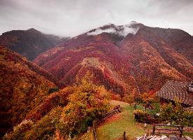 秋意浓浓的深秋风景