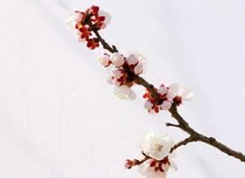 开着正旺的梅花图片