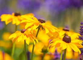 明艳唯美黄色花朵图片桌面壁纸