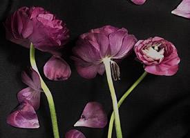 精致唯美的花卉图片手机壁纸