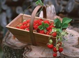 一组柔嫩汁多、形美味甜的草莓