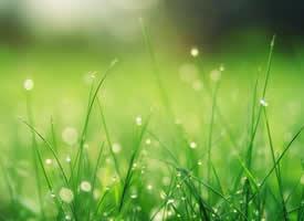 露珠下的小草唯美高清桌面壁纸