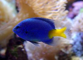 一组热带观赏鱼图片