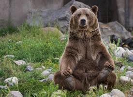 一组近距离拍摄的棕熊图片
