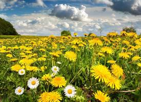小清新黄色花卉图片桌面壁纸