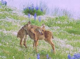 春天和梅花鹿很配的模样