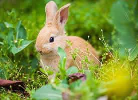 一组乖巧超可爱的小兔子图片