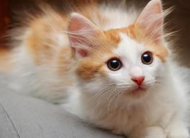 可爱的宠物猫咪电脑壁纸图片