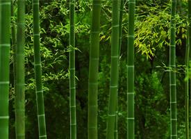 优美的竹林唯美高清桌面壁纸