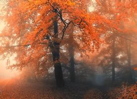 枯黄的秋季风景壁纸图片