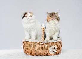 一篮子的加菲小猫图片