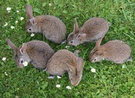 一组灰色的兔子图片
