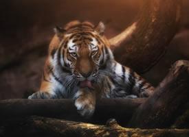 一组光影下的野生动物图片