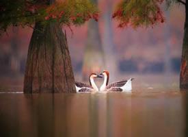 一组唯美天鹅湖摄影图片