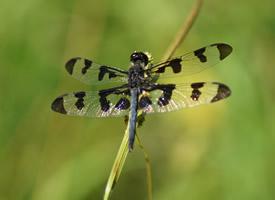 一组近距离的蜻蜓图片