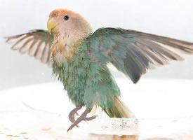 灵秀可爱的小鹦鹉