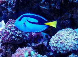 五彩斑斓的热带鱼图片