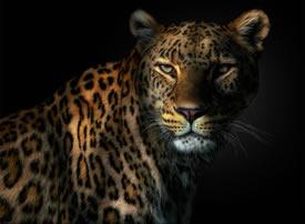 一组唯美清晰的野生动物图片