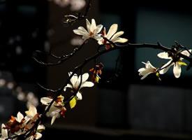 毎当這花開時、是不是春天最美的時刻