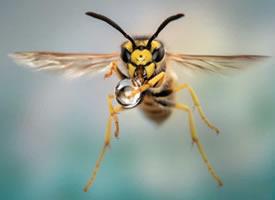 一组超超近距离的蜜蜂拍摄图片