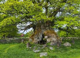 瑞典美丽的春天风景壁纸图片