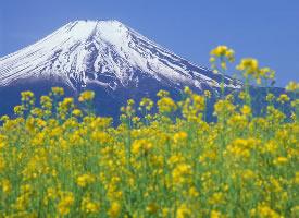 被春天花儿簇拥的富士山